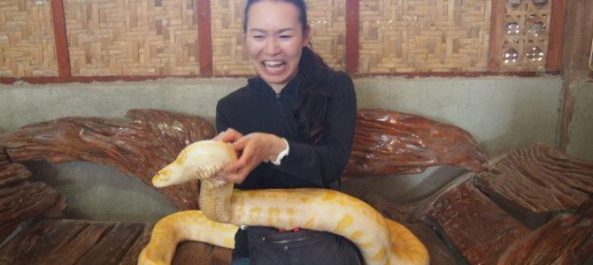 旅記事37 大蛇に会った。