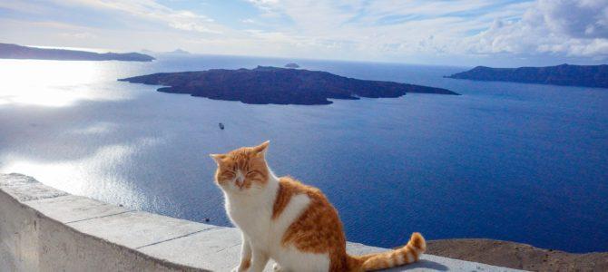 旅記事301 美しいサントリーニ島と猫たち