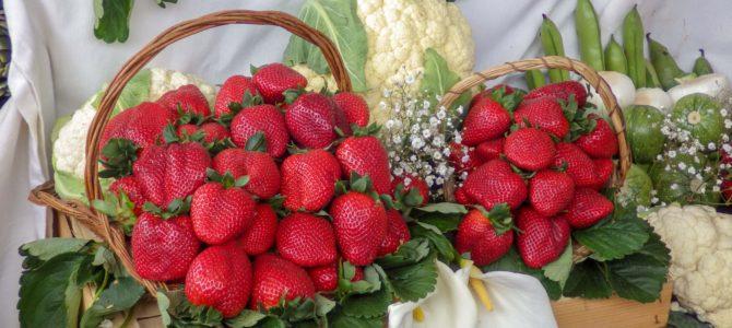 旅記事319 真っ赤な苺の世界、ストロベリーフェスティバルに行った。