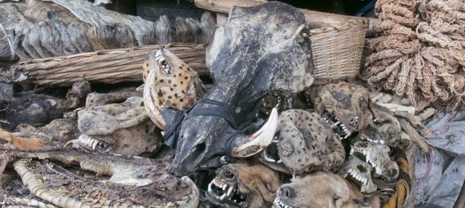 旅記事371 動物の干し首が。コトヌーのブードゥーマルシェ