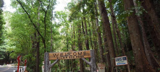 旅記事38 バタフライガーデンと林