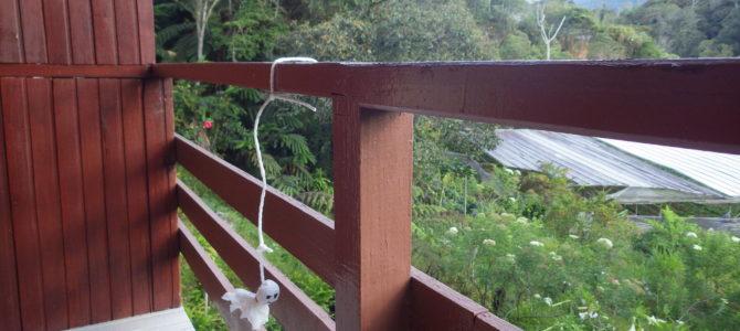 旅記事94 キナバル公園植物園に行ってみた