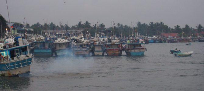 旅記事237 巨大魚たくさんニゴンボのフィッシュマーケット
