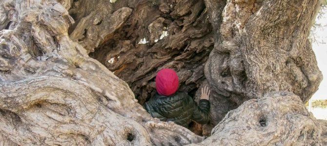 旅記事298 ハニア散歩&世界最古のオリーブの木を目指して